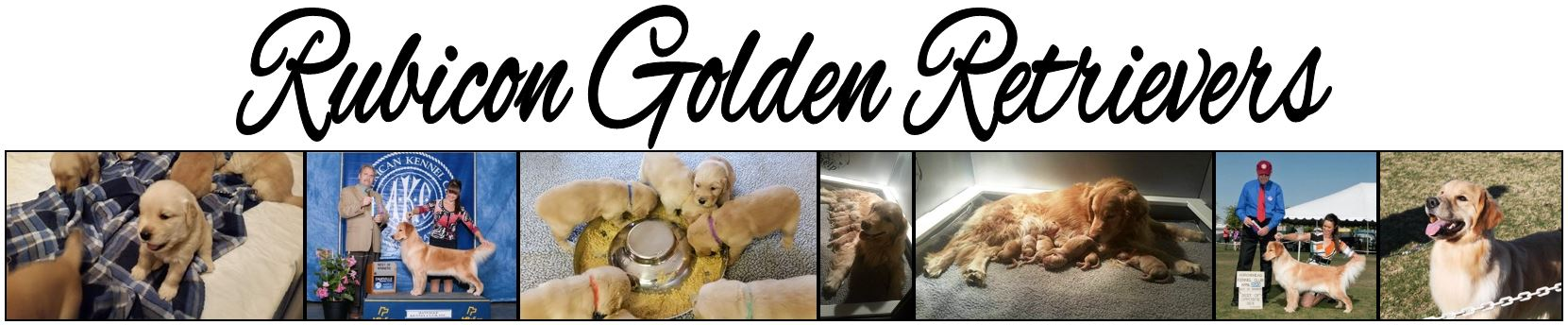 Rubicon Golden Retrievers